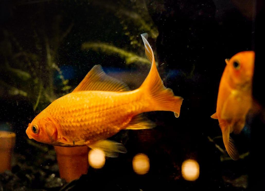 Kantoorvissen